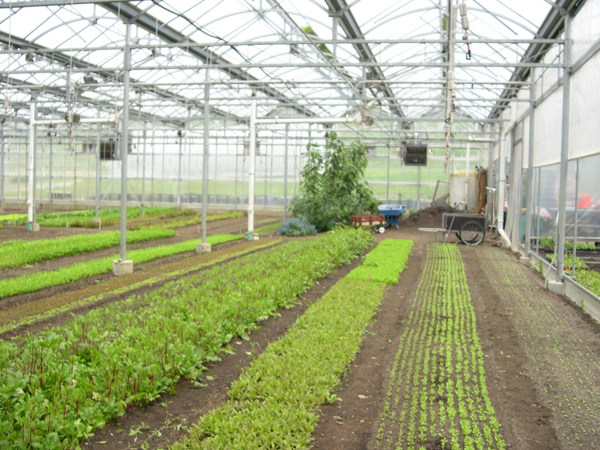 stone-barns-center-greenhouses_low-res1